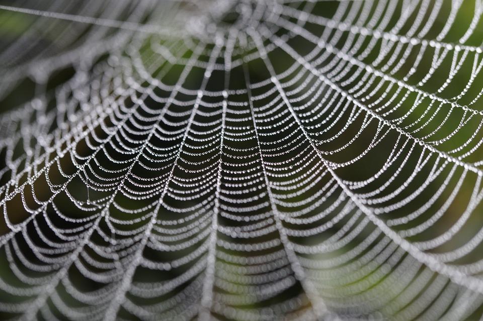 075-02 Cobweb